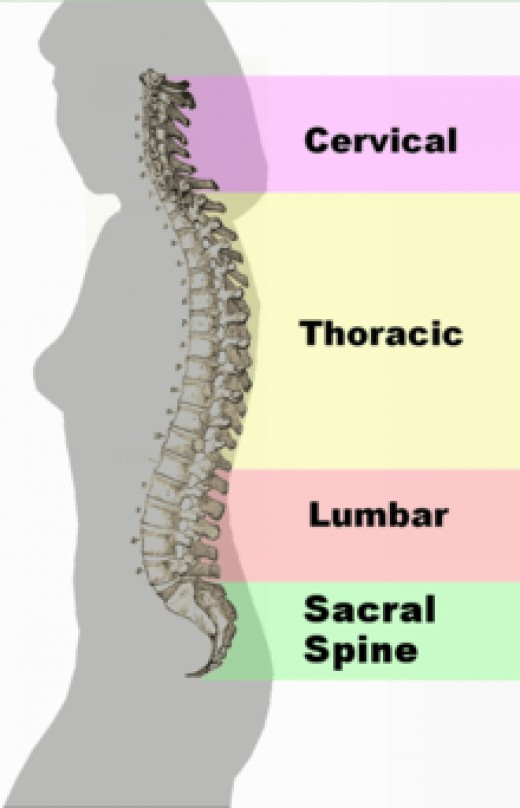 Spine and stuff.  It's medical looking.