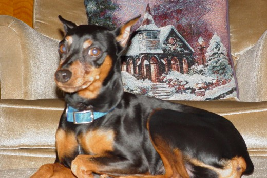 Min Pin - Rocky (passed away 12/09)