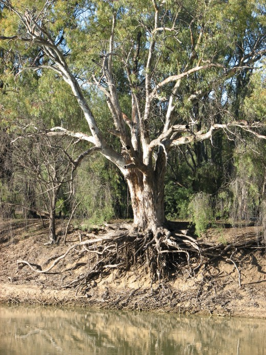Low water level in the drought, Murray River, Australia