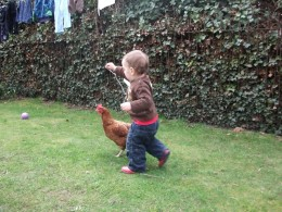 Our little boy playing with a chicken