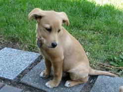 Rump the puppy: A short life.