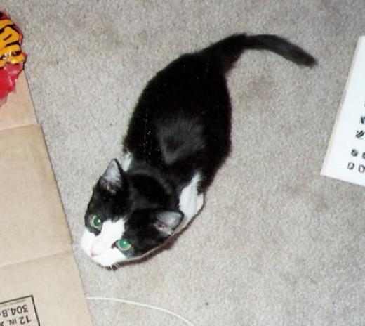 Mr. Minkus's tail has fur!