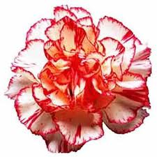 Carnations express affection, too.