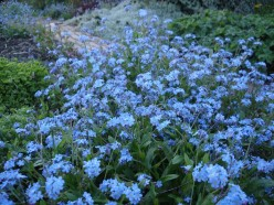 Forget Me Not - A Short Story
