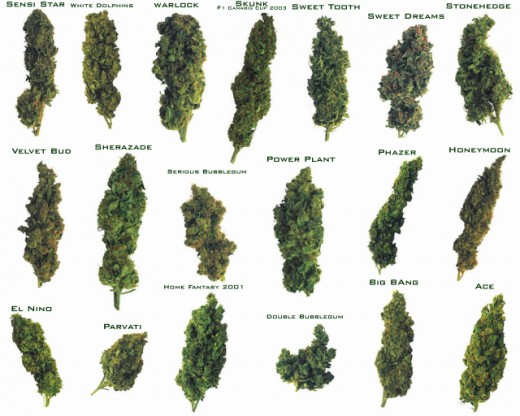 different selections of marijuana