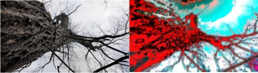 At left, a tree in its natural state.  At right, image enhancement software turns the tree into a impressionist watercolor painting.