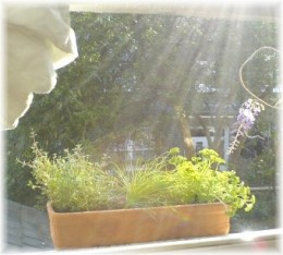Grow your own natural insect repellent and brighten your day!