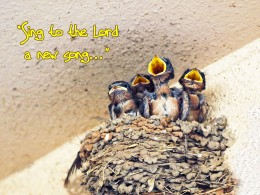 """Baby Barn Swallows - """"Sing to the Lord a New Song,""""  Psalm 96:1"""