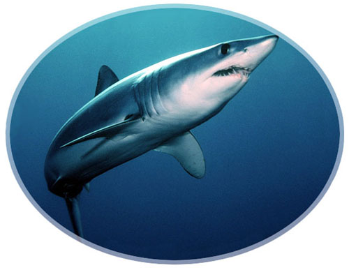 global shark attacks increasing