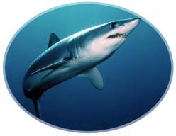 Increase in Global Shark Attacks up till 2011