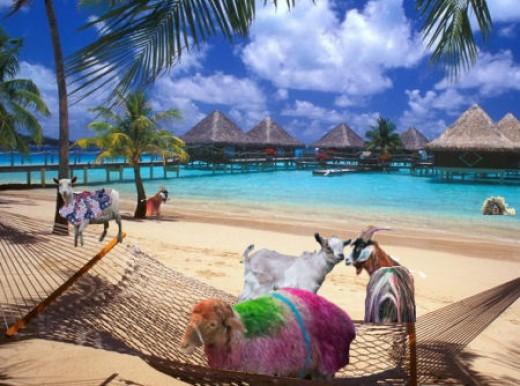 Goatropia's Tropical beach - *See composite component image citation