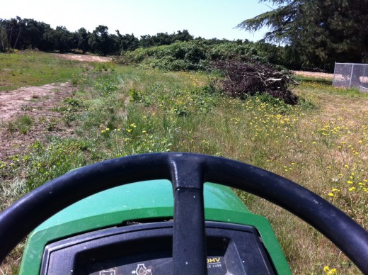 The view of the back 'yard' area from the mower.