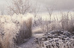 Jack Frost Has Paid Us A Visit.