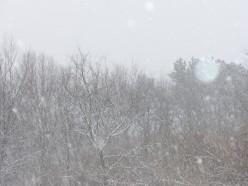 The beauty of a snowfall