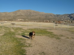 My dog in the Alamogordo Bark Park.