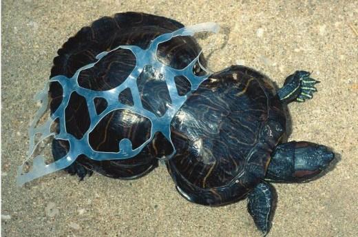 one hazard of plastic waste