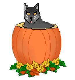 Cute Black Cat In Pumpkin In This Photo