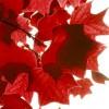 Scarlet Hemlock profile image