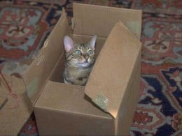 Does Amazon ship cats now?