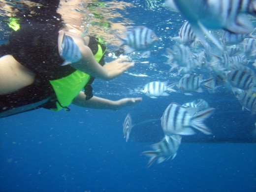 Fish feeding at Simisu Islands