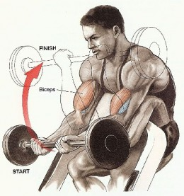 Example of a single joint exercise - The preacher curl.