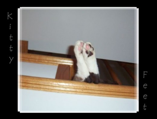 The feet of Mr. Jelly. He loved sleeping on the stairs. I miss him. He passed away last year.