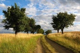 Summer: Country road.