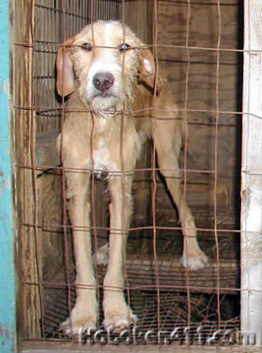 A dog is left in a small cage, a sign of animal cruelty and neglect.