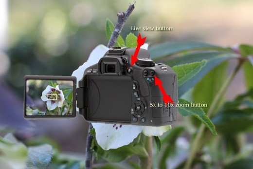 The button indicated by the red arrow at the top will engage Live View, and the red arrow on the right is pointing to the button that will activate the 5x or 10x zoom.