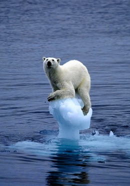 The effects of global warming on polar regions.