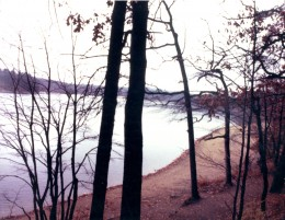 Walden Pond's Shores