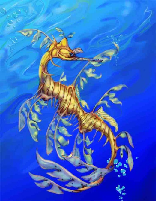 Until recently I thought Sea Dragons were mythical creatures, but they do exist in the Great Barrier Reef near Australia.