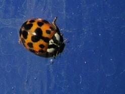 Problem Invasive Species In The UK