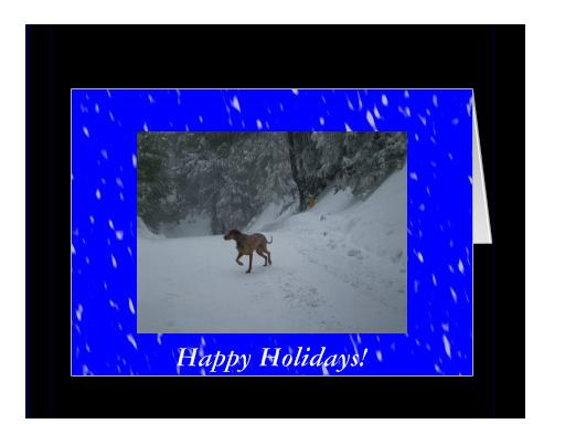 A picture of Lucky dog running out in the snow.  I used photo editing software to create the blue background with snow like effects.