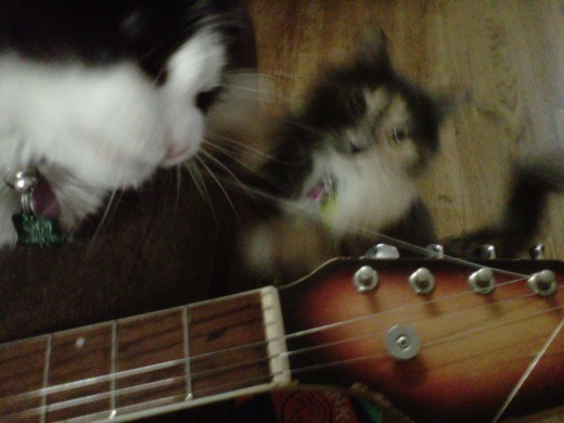 I generally have two guitar techs assist me.  Minkus is adjusting a string.  Sydney Viscious is observing.