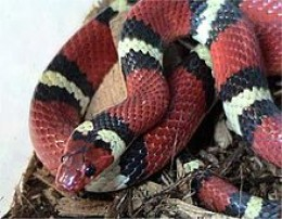 This snake is your friend for life.