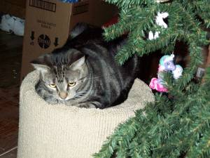 Tabby with a kitty-safe plastic ornament