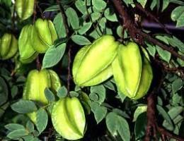 Starfruit (balimbing)