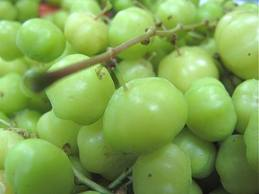 Gooseberries (Karamay/caramay/bangkiling)