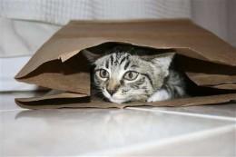 A kitty enjoying a bag