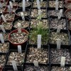 Top Tips on How to Sow Seeds