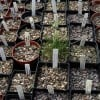 How to Sow Seeds