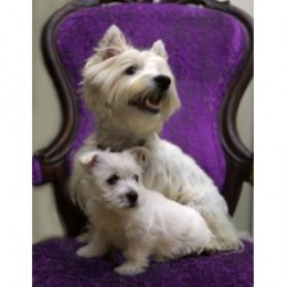 MOTHER AND DAUGHTER WESTIES