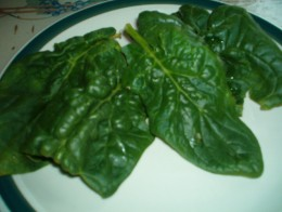 Savoy spinach leaves