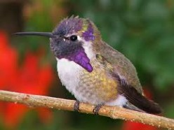 Attracting Hummingbirds: My Hummingbird Story