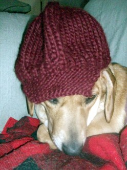 newsboy hat knit pattern newsboy hat knit pattern - these are the