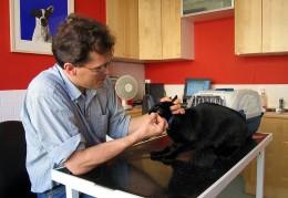 Regular checkups help prevent periodontal disease in cats.