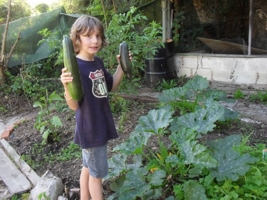 Gardening with children, letting them grow their own fruits and vegetables, will increase the chance that they eat the fruits and vegetables that they have harvested.