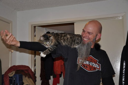 Same foster cat as in above photo. This was such a cool kitty!! The cat loved to ride and walk on Brian's shoulders.