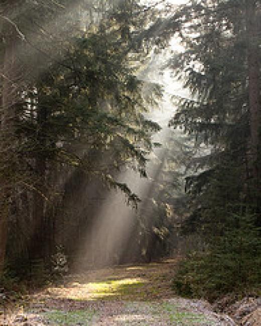 Beams of Light from rob .brob Source: flickr.com